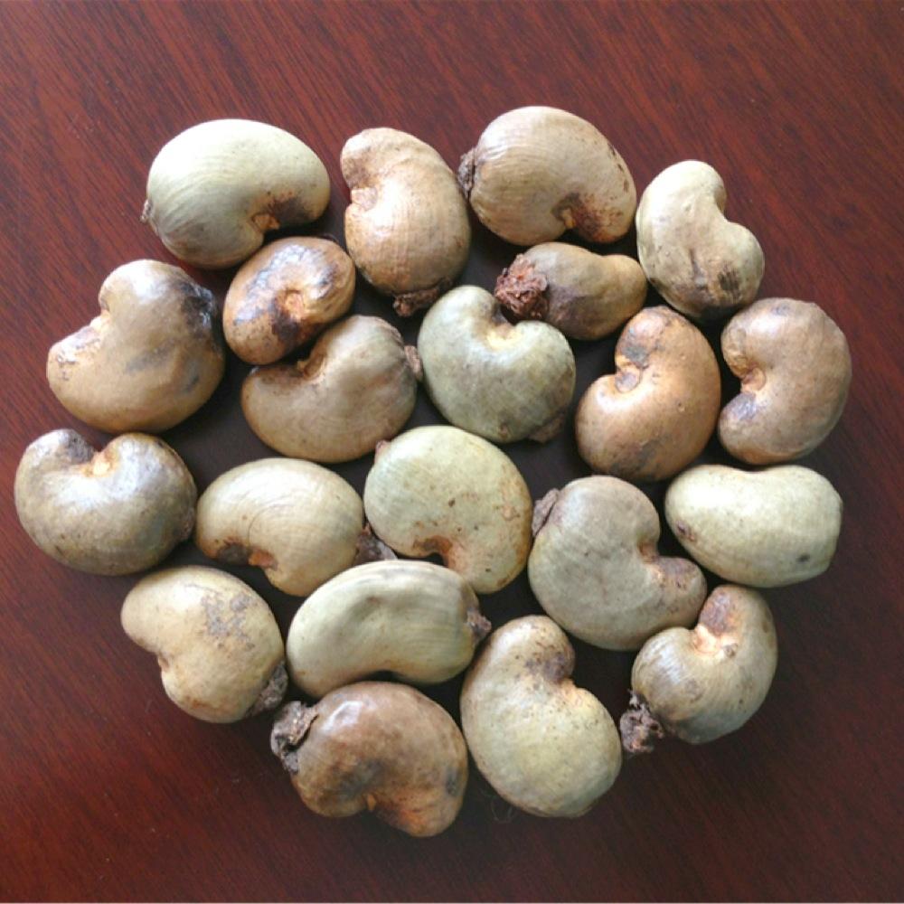 Cashew nut export